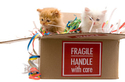 Essential Tips for Moving House with Your Cat