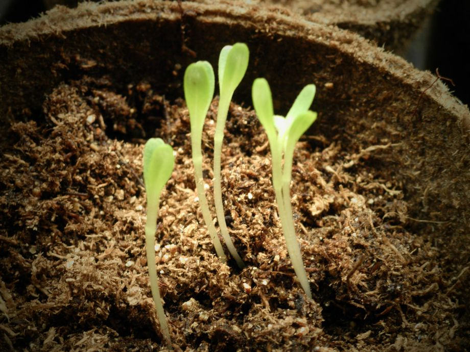 Diary of a clueless gardener – getting started